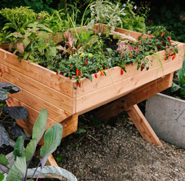 Eden Project outdoor vegetable table.jpg