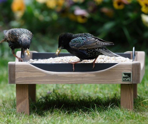 RSPB ground bird feeding table.jpg