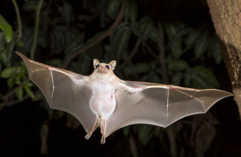Interesting Facts About Bats For Kids