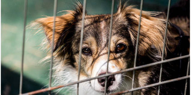 animal welfare charity We specialise in animal rescue & furthering the welfare cause for all animals click to learn more about & support the uk's leading animal welfare charity.