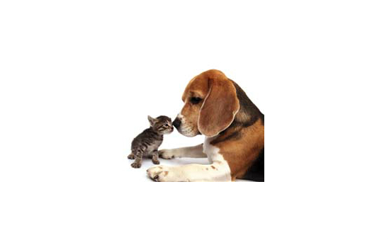 Animal Care Trust profile image 1