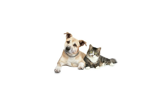 Animal Care Trust profile image 3