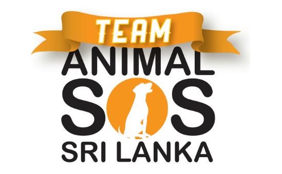 animal-sos-sri-lanka-47069 -  - image 1