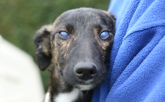 Bath Cats and Dogs Home (RSPCA Bath & District Branch) profile image 6