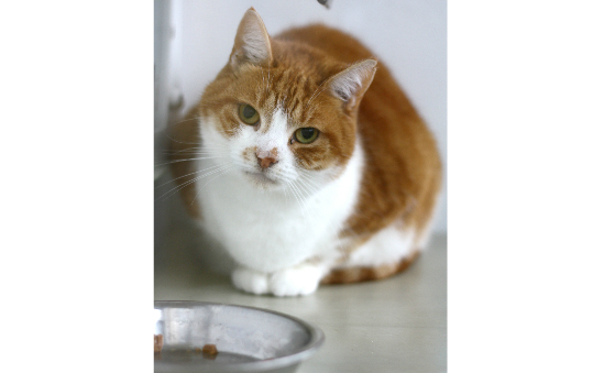 Bath Cats and Dogs Home (RSPCA Bath & District Branch) profile image 5