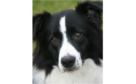 Border Collie Trust GB profile image 2