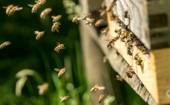 British Beekeepers Association profile image 2