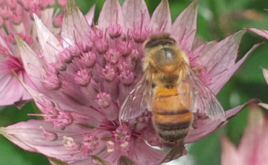British Beekeepers Association profile image 3