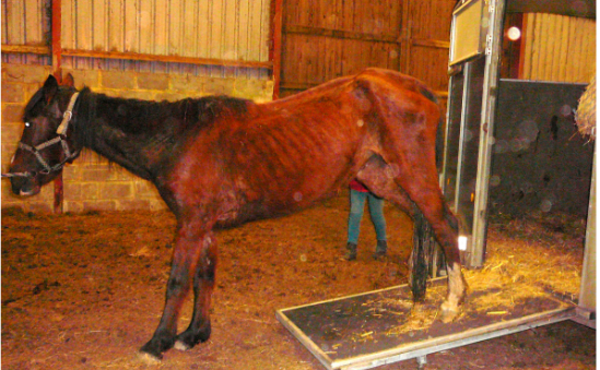 Brownbread Horse Rescue & Disabled Riders profile image 2