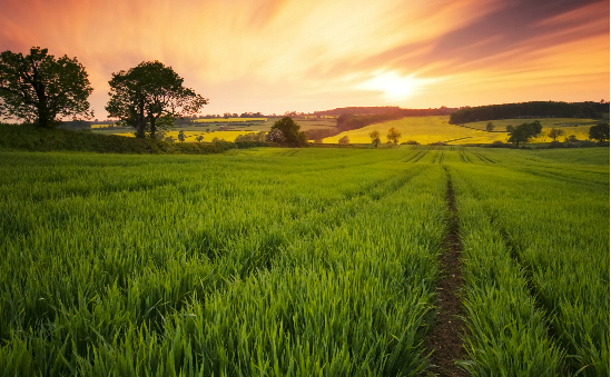 Campaign to Protect Rural England - CPRE profile image 3