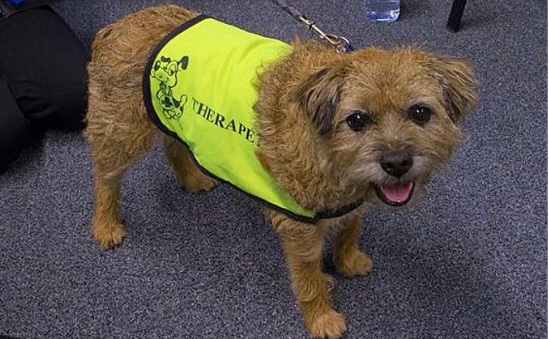 Canine Concern Scotland Trust (Incorporating Therapet) profile image 1