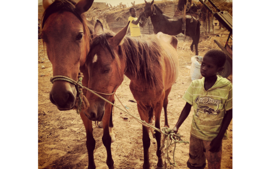 The Gambia Horse and Donkey Trust profile image 6