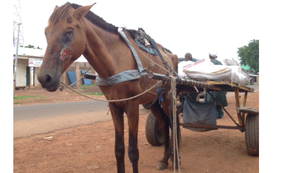 The Gambia Horse and Donkey Trust profile image 2