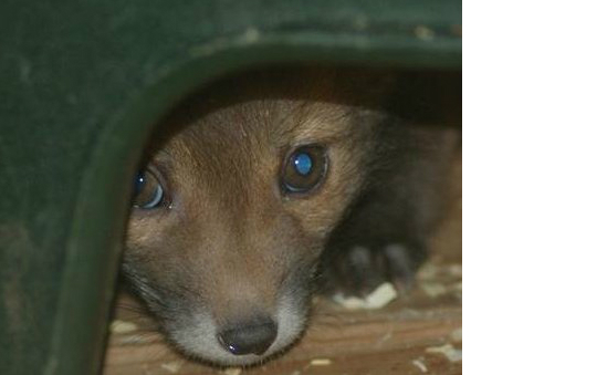 Hessilhead Wildlife Rescue Trust profile image 1