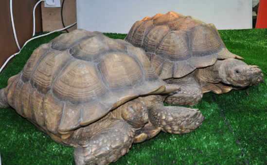 International Tortoise Association profile image 1