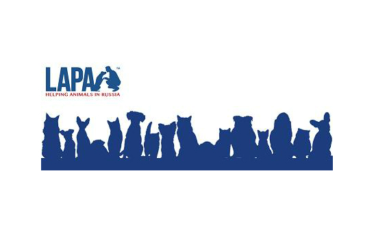 Lapa Helping Animals In Russia profile image 1