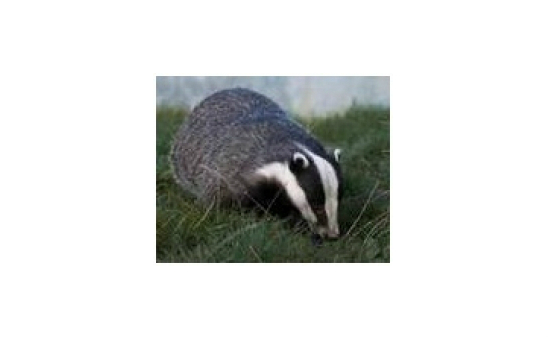 North Wales Wildlife Trust profile image 2