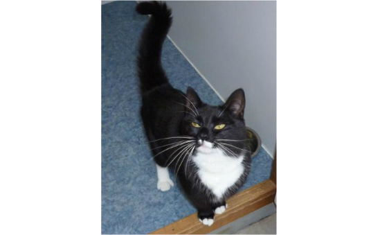 RSPCA Alton, Haslemere & Petersfield profile image 2