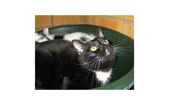 RSPCA Balham and Tooting Branch profile image 2