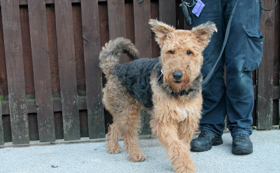 RSPCA Halifax, Huddersfield, Bradford & District Branch profile image 4