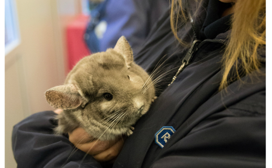 RSPCA Halifax, Huddersfield, Bradford & District Branch profile image 3