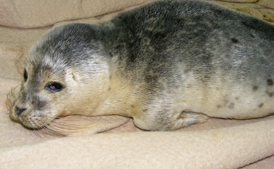 Seal and Bird Rescue Trust profile image 3