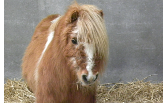 The Flicka Foundation profile image 4