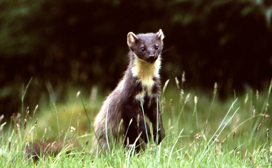 The Vincent Wildlife Trust profile image 1