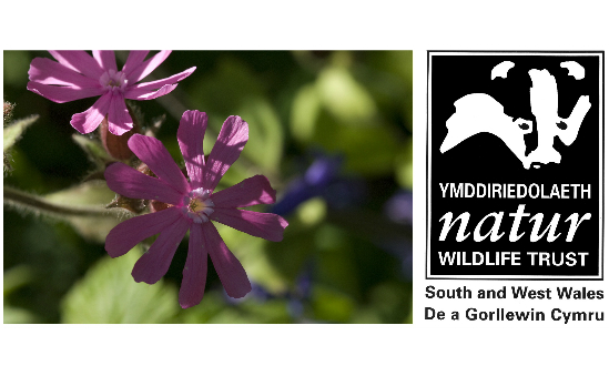 The Wildlife Trust of South and West Wales profile image 1