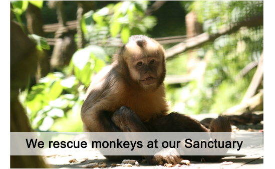 Wild Futures (The Monkey Sanctuary) profile image 2