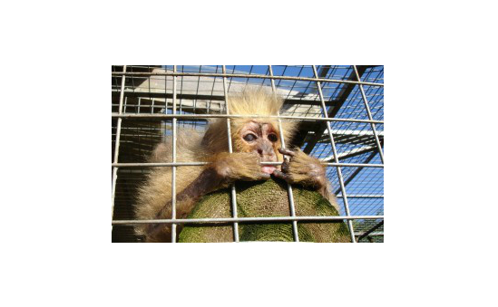 Wild Futures (The Monkey Sanctuary) profile image 3