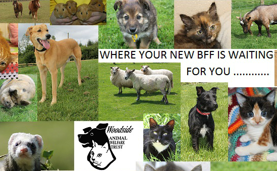 Woodside Animal Welfare Trust profile image 1
