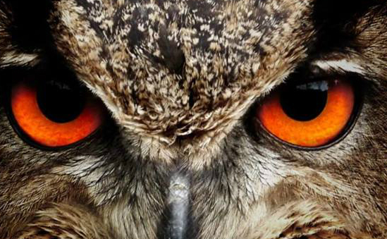 World of Owls profile image 1
