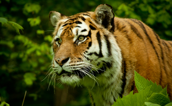 wwf-uk -  - image 1
