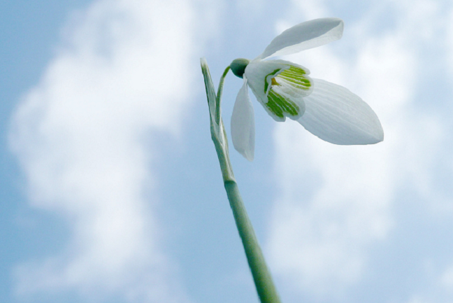 snowdrop-1248254-1280x856.png