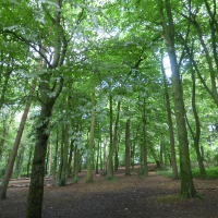 Appeal from Patron Dame Julie Walters helps save Warley Woods Trust