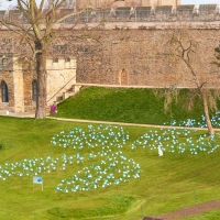 St Barnabas Hospice - Forget Me Not Display
